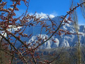Blossom season just about to start in Hunza Valley