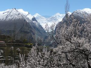 Diran Peak Hunza Valley Blossom  ( Last valley before base camp)