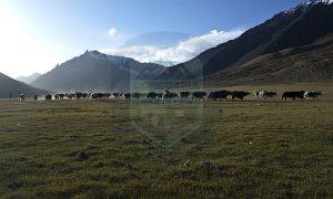 Shimshal pasture land